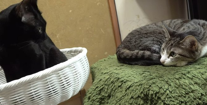 意外と距離が近い猫ちゃんたち、じーっと見つめ合って…