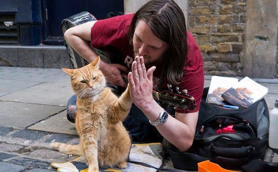 Laylaの猫コラム 「猫は飼い主を選んでやってくる」ボブという名の猫のお話