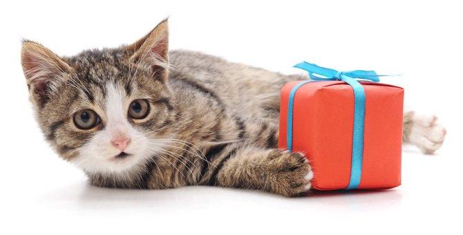 猫のキャンペーン2選!内容や応募方法