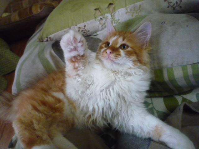 どこ?神社の境内から猫の声!保護猫『あんず』が家族になった日