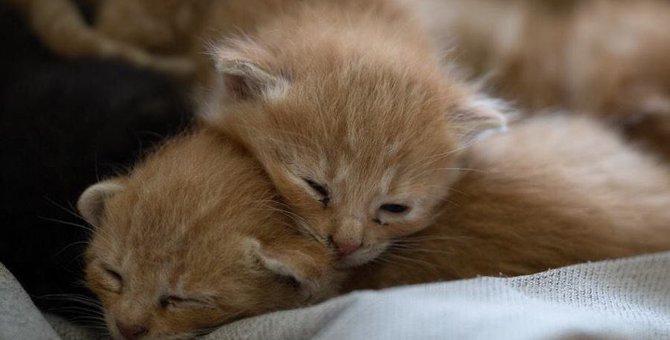 保護猫との距離の縮め方5ステップ