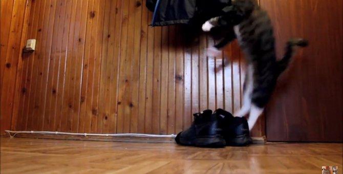 ジャンプ!ダッシュ!そしてリラックス~♡激しすぎる猫の日常がおもしろい
