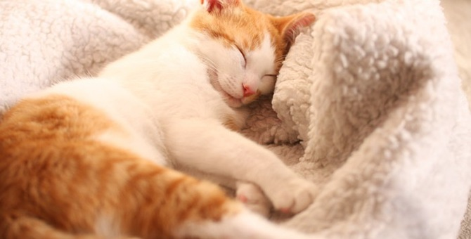 猫はきな粉を食べられる?体にいい効果や食べさせる時の注意点