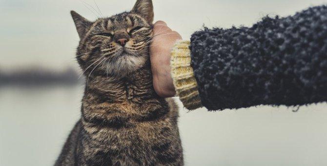 「ただいま!」飼い主が帰って来たときの猫の反応5選