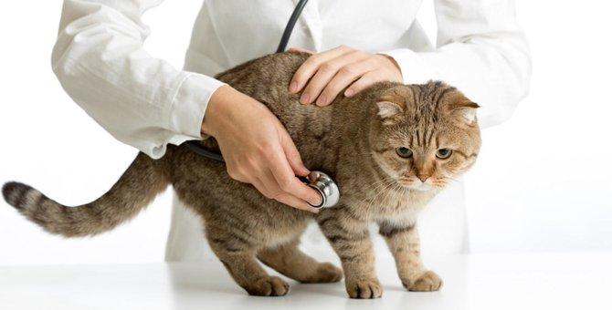 猫の子宮蓄膿症とは?症状や治療の方法