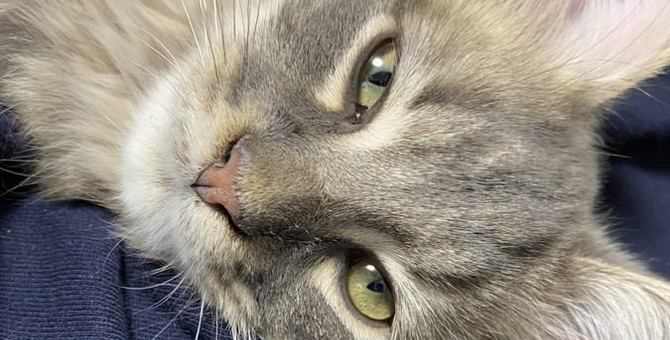 猫が帰宅時に『スリスリ』するのはなぜ?パターン別でわかる心理5選