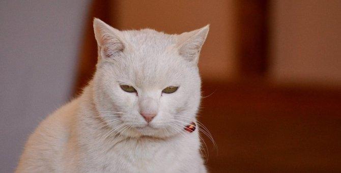 猫の『イライラサイン』5選!こんな時は無理にスキンシップをとらないで!