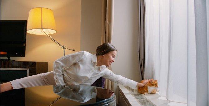 猫に触れてはいけない『NGタイミング』5選!無理やりスキンシップを取るとどうなるの?
