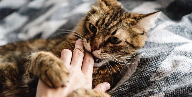 触ると嫌がる猫の体の場所