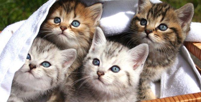 同じ種類でも『長毛、短毛』両方いる猫の種類5選
