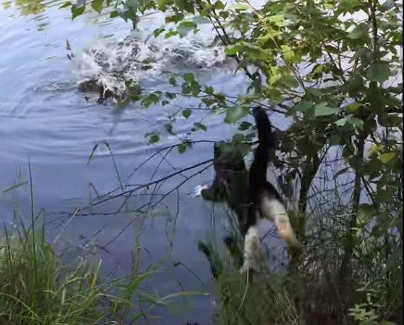 鴨の餌づけを鑑賞する猫ちゃん。しかし本能には抗えず