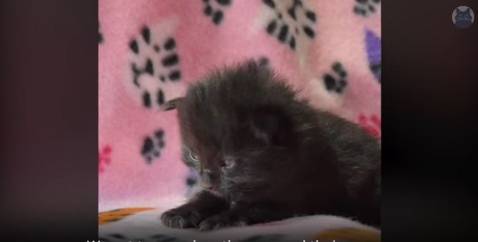 【コラ映画猫】里子のリジーが人気者アウル・キティになるまで(前編)