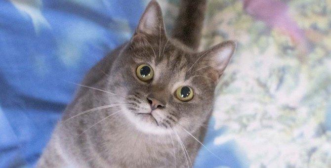 猫がジャンプするときに『ニャ!』と声を出す理由3つ