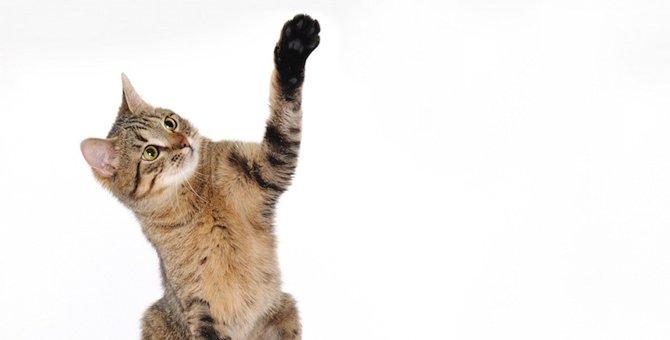 猫が片手を上げてる時の5つの心理