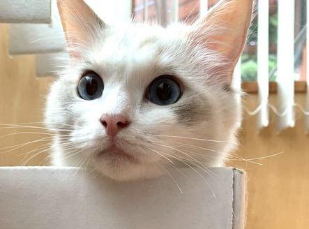 猫が『かわいい』と感じるのは人間の本能!?その理由を徹底検証!