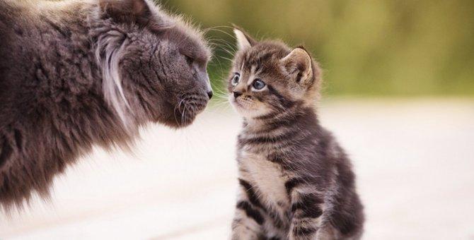 猫が『強烈に臭い時』に考えられること4つ!もしかしたら病気になっていることも…?