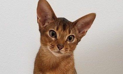 『社交的な猫』の特徴5つ!警戒心が少ないのはどんな猫?
