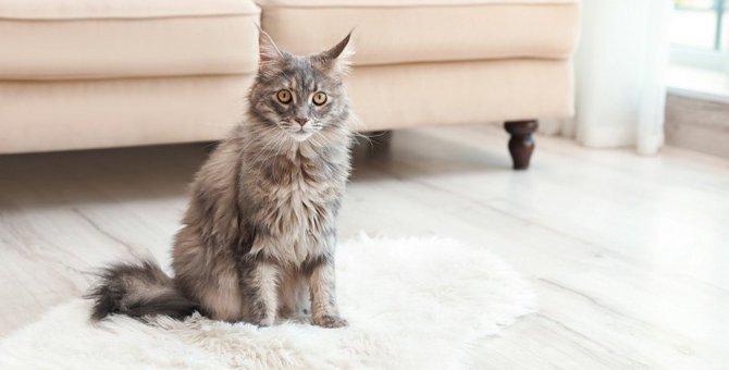 猫の早死に繋がってしまう『危険な飼い方』4つ!今すぐ改善すべきポイントとは?