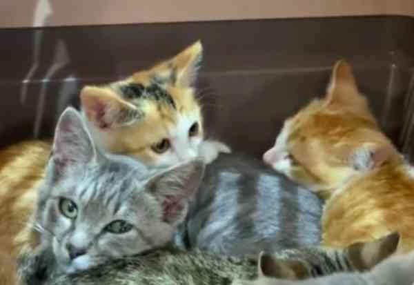 駐車場で生き延びた9匹の子猫…家猫修行の優等生へ!