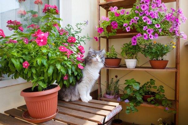 ベランダに最適!猫の脱走を防止する柵を手作りする方法