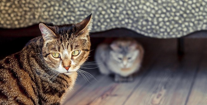 猫が飼い主に『嫉妬』している時にする行動5選!愛猫もこんなアピール、していませんか?