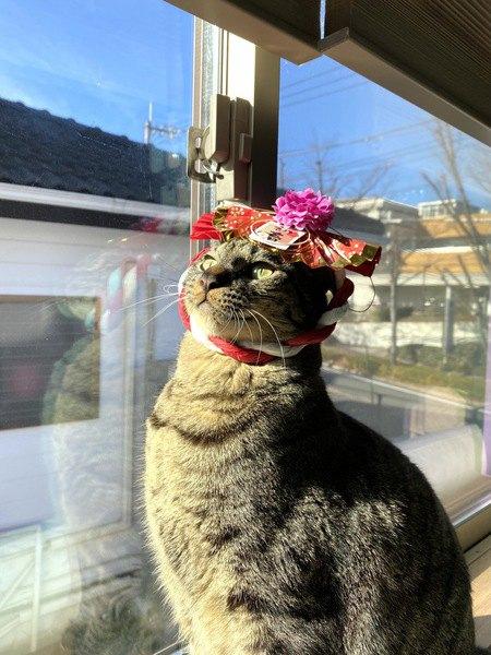 猫にストレスなく『被り物』をしてもらう方法5つ