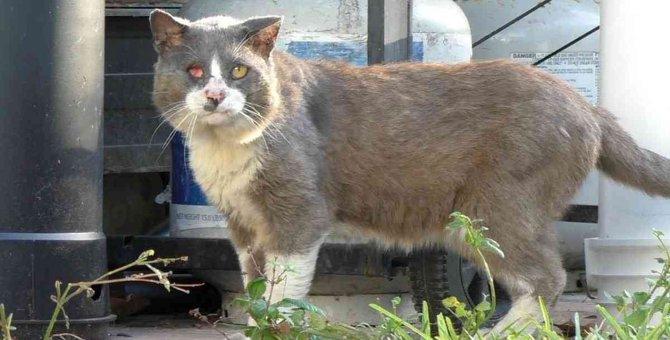 目は潰れアゴが腫れた猫…優しい家族のもとで幸せに!