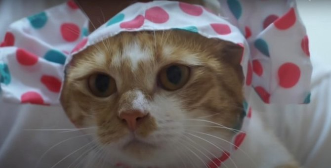 キャンディーの被り物を身につけた猫ちゃんの反応は?