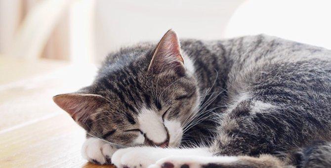 猫がよく寝る4つの理由と可能性のある病気