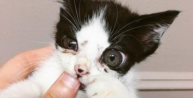 箱に入れて捨てられていた子猫の首には大きな傷…驚きの原因とは