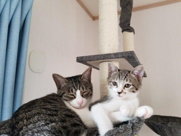 先住猫のストレスチェック!後輩猫にしがちな行動と心理5つ