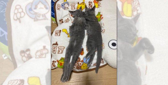 安心しきって「すや~ぁ」幸せを掴んだ子猫たちの寝姿にほっこり♡