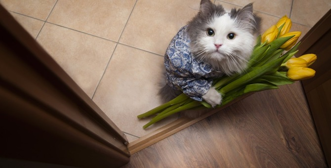 本当にあった猫の恩返し!驚きのエピソード3選