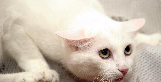 猫が『嫌な感情』を表しているサイン7つ!気持ちを知るにはここをチェック
