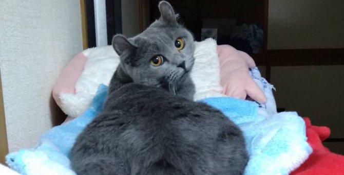 猫が人にお尻を向けるのはなんで?4つの理由と気持ち