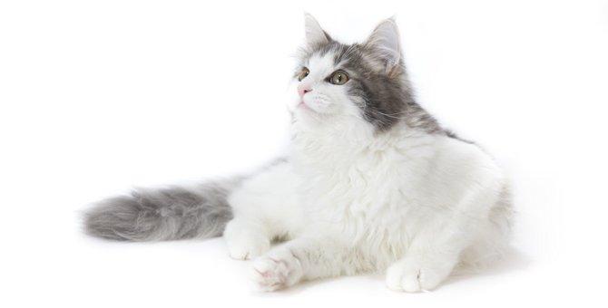 猫の毛並みが悪いのはどうして?6つの原因