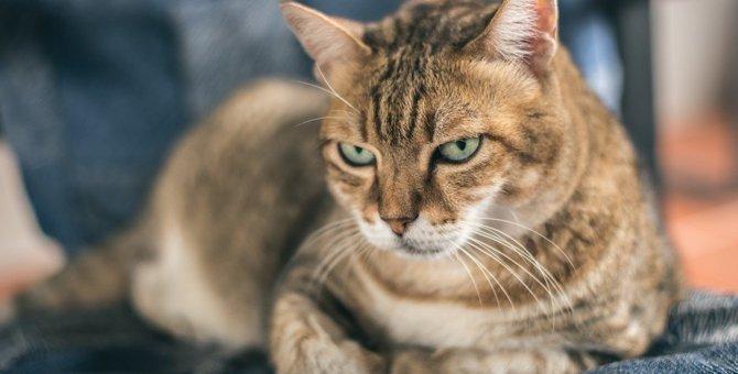 猫が『嫌いな人』だけにする態度5選