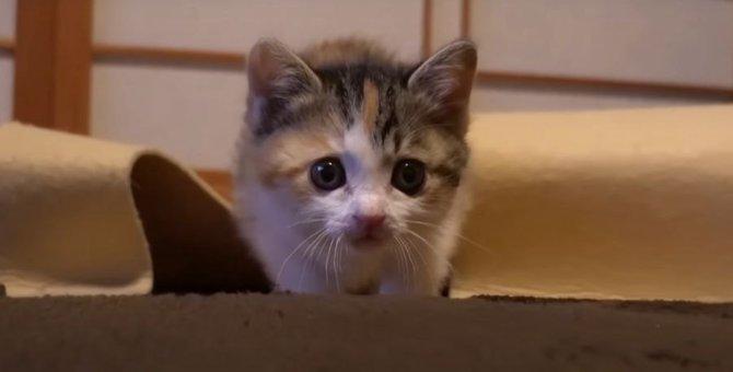 迫ってきたー!姉妹猫ちゃんのじわじわシーン