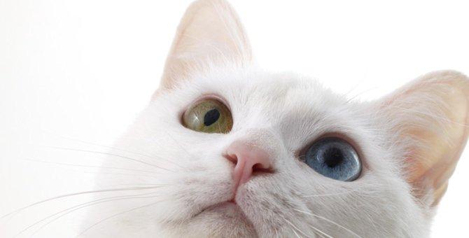 猫が声を出さずに鳴く「サイレントニャー」の心理