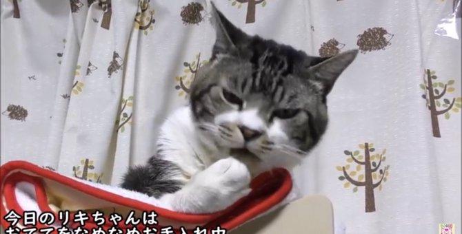 おててを懸命にグルーミング♪猫のリキちゃん魅惑のグーナメ♡