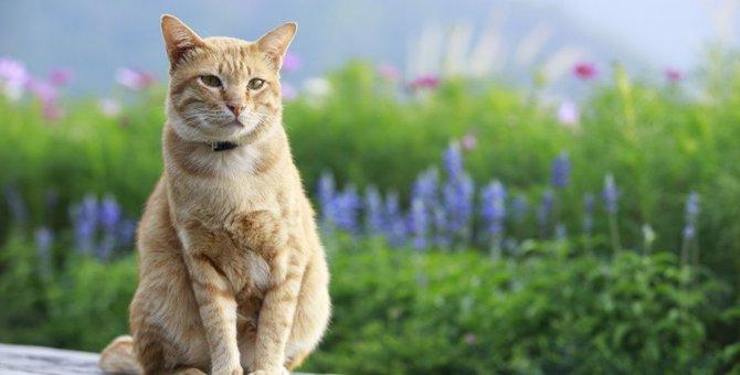 命の危険も…!猫に『NGな秋の花』4つ