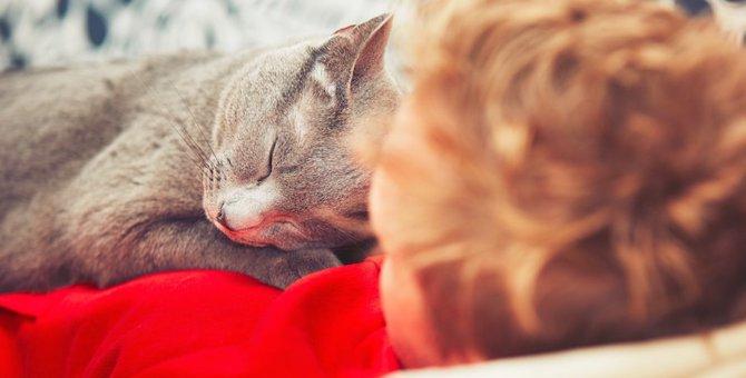 猫が一緒に寝たいと思う飼い主6つの特徴