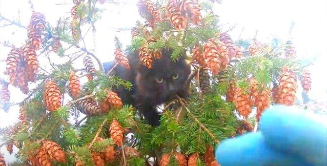 猫と飼い主が同じ木で立ち往生!消防出動するも飼い主のみ救助!?