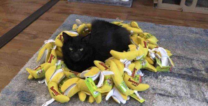 SNSで大人気♡キャットニップバナナに歓喜する保護猫軍団!
