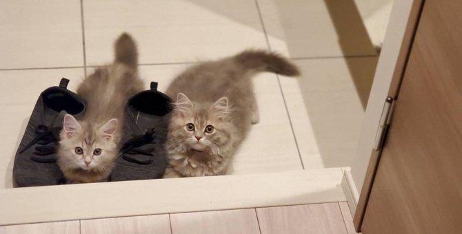 包囲されてるニャ!靴を取り囲み外出阻止する猫達にキュン死♡