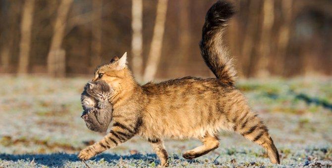 猫の首、つかむとどうなる?お手入れが楽になる、その方法☆