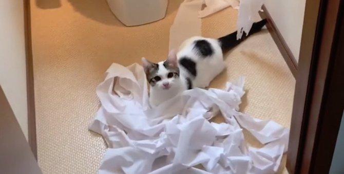 子猫ちゃんの大胆なイタズラっぷりにもはや笑うしかない