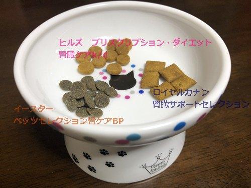 【猫の腎臓ケア】猫もナットク!おいしい療養食3選