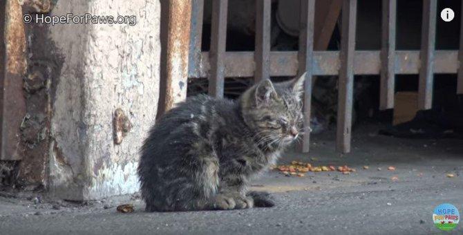 盲目の子猫に未来は…あった!切なくて優しい、子猫の物語
