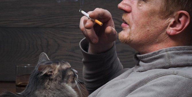 猫のいる部屋で喫煙するリスク3つ